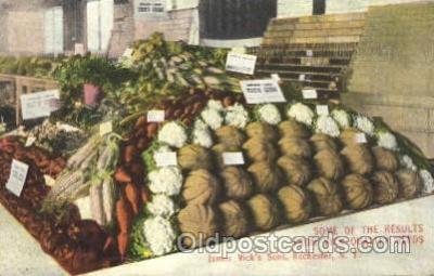 adv001571 - Vick Quality seeds, James, Vicks Sons, Rochester, New York, NY, USA Advertising Postcard Post Card