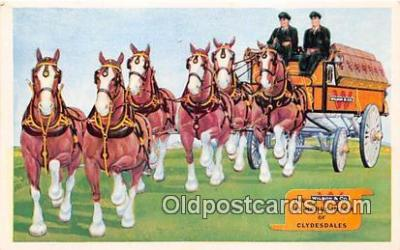 Wilson Co Six Horse Hitche of Clydesdales Postcard Post Card
