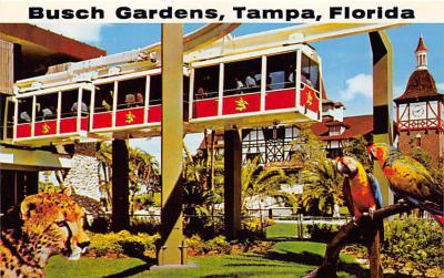 amp009041 - Tampa, Florida, FL, USA Postcard