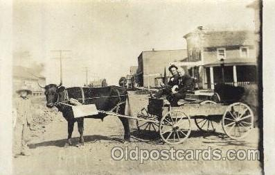 A buffalo cart
