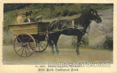 and000080 - Rocket, Horse wagon Animal Drawn Postcard Post Card