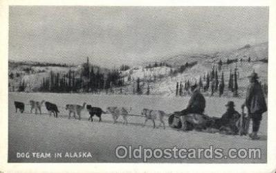 Dog team in Alaska