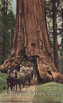 and000108 - California USA, redwood tree, Wawona Animal Drawn Postcard Post Card