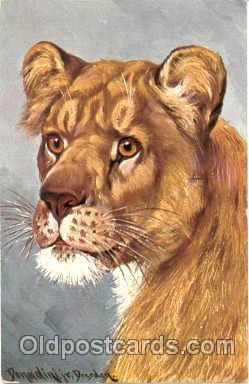 ani001009 - Tiger Animal Postcard Post Card