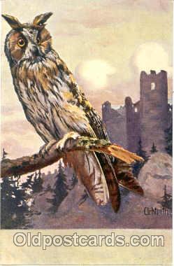ani001020 - Owl Animal Postcard Post Card