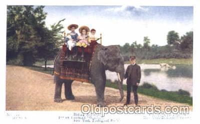 ani001052 - Animal Postcard Post Card