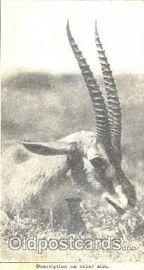 ani001068 - Animal Postcard Post Card
