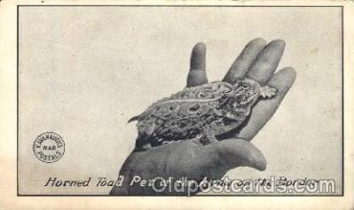 ani001106 - Horned Toad Animal Postcard Post Card
