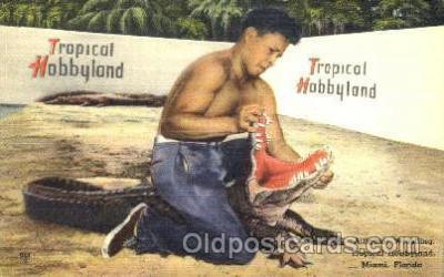 ani002001 - Miami Florida USA Alligator Wrestling Animal Postcard Post Card