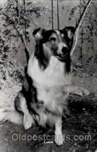 act012025 - Lassie Actress / Actor Postcard Post Card Old Vintage Antique