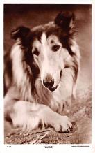 act012246 - Lassie Movie Star Actor Actress Film Star Postcard, Old Vintage Antique Post Card