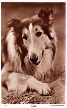 act012296 - Lassie Movie Star Actor Actress Film Star Postcard, Old Vintage Antique Post Card