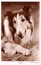 act012298 - Lassie Movie Star Actor Actress Film Star Postcard, Old Vintage Antique Post Card