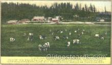 adv001358 - Carnation Stock Farm, Advertising Postcard Post Card