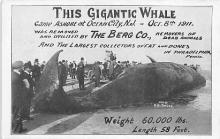This Giganic Whale, Ocean Side NJ