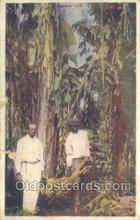 afr100025 - African Life Postcard Post Card