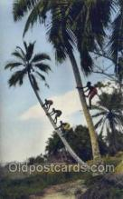 afr100039 - African Life Postcard Post Card