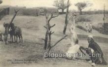 afr100126 - Boucherle Modele African Life Postcard Post Card