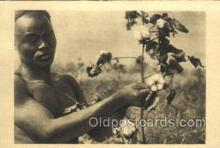 afr100397 - La Cueillette du Cotton African Life Postcard Post Card
