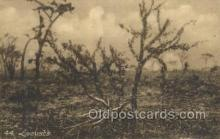 afr100485 - Locusts African Life Postcard Post Card