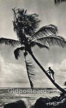 afr100559 - Cueillette des noix de coco African Life Postcard Post Card