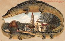 agb001012 - Alligator Border Post Card Old Vintage Antique