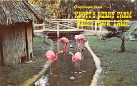 amp005055 - Knott's Berry Farm, Ghost Town, California, CA, USA Postcard