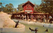 amp005223 - Knott's Berry Farm, Ghost Town, California, CA, USA Postcard