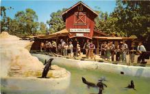 amp005256 - Knott's Berry Farm, Ghost Town, California, CA, USA Postcard