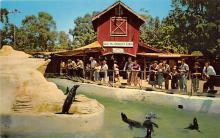 amp005267 - Knott's Berry Farm, Ghost Town, California, CA, USA Postcard