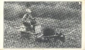 A pig cart