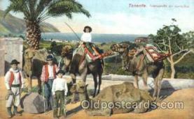 Tenerife, Transporte en Camellos