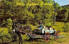 and000141 - White Lightnin' Express Molly Sue, Moonshine Holler Postcard Post Card