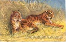 ani001003 - Tiger Animal Postcard Post Card