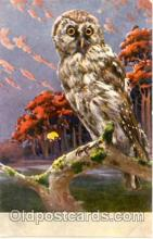 ani001019 - Owl Animal Postcard Post Card