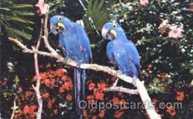ani001035 - Animal Postcard Post Card