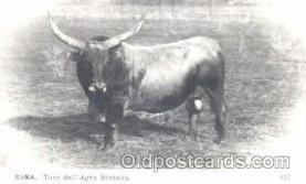 Bull/Roma