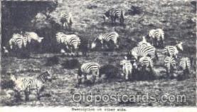 ani001053 - Animal Postcard Post Card