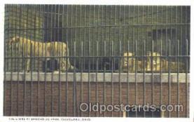Lions, Brookside Park, Cleavland Ohio, USA