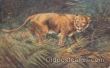ani001074 - Artist George Rankin Animal Postcard Post Card
