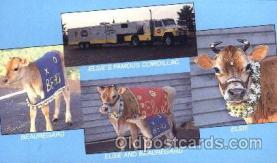 ani001079 - Animal Postcard Post Card