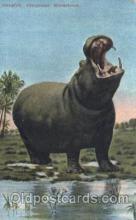 ani001082 - Hippopatamus Animal Postcard Post Card