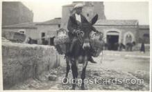 ani001092 - Mule Animal Postcard Post Card