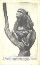 ani001141 - Monkey Animal Postcard Post Card