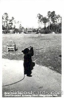 ber001005 - Okefenokee Swamp Park, Waycross, GA USA, Bear Bears Postcard Post Card
