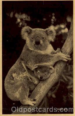 ber001125 - Bear Bears Postcard Post Card Old Vintage Antique