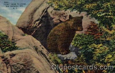 ber001172 - The Catskills Mts, NY USA Bear Bears Postcard Post Card Old Vintage Antique