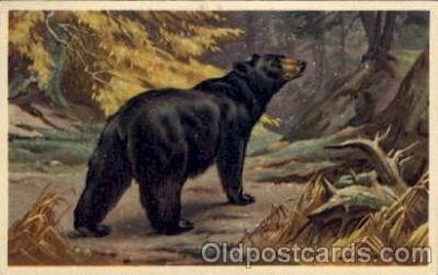 ber001174 - Artist Walter A. Weber Bear Bears Postcard Post Card Old Vintage Antique