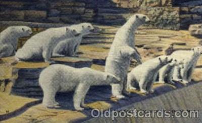 ber001177 - Zoological Park, Detroit, Michigan USA Bear Bears Postcard Post Card Old Vintage Antique
