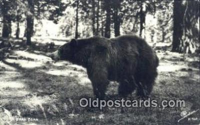 ber001249 - Real Photo Bear Bears Postcard Post Card Old Vintage Antique